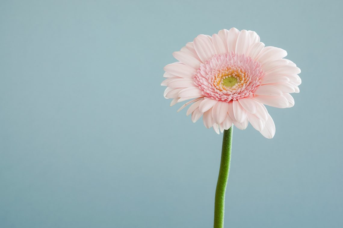 Flower to illustrate everyday ways to help your future self